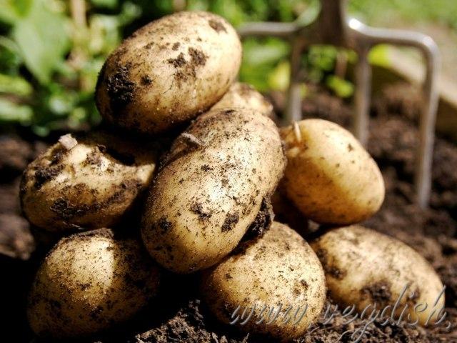 пословицы и поговорки про картошку